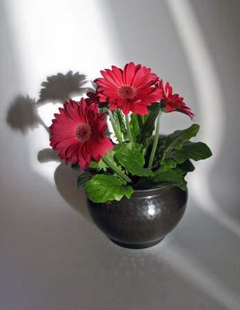 Blomsterpotte