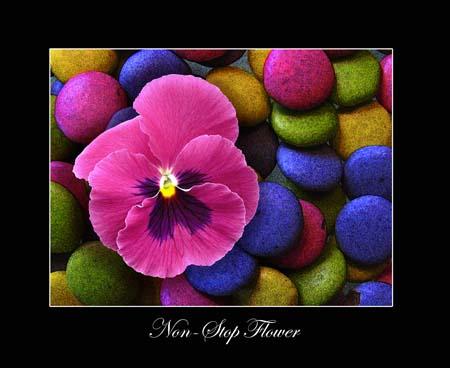 Non-Stop Flower